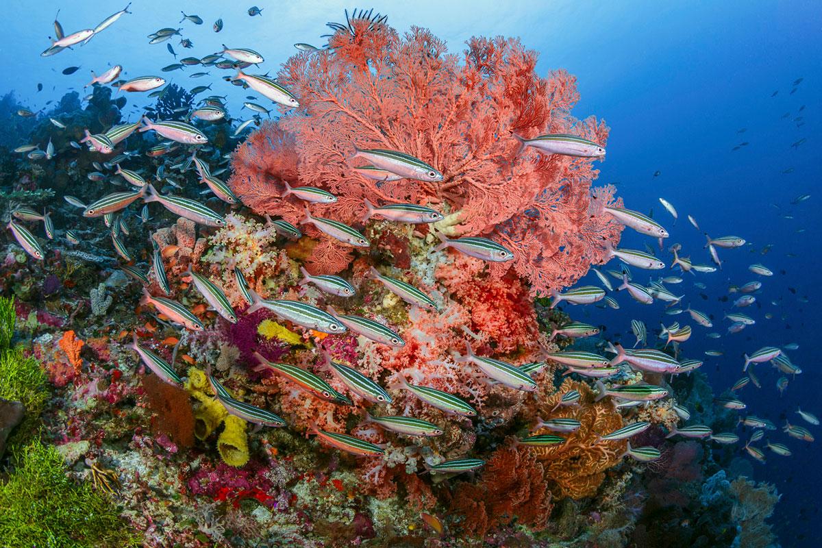 IDN_Wakatobi-Resort-Reef-©-Wakatobi-Resort.jpg