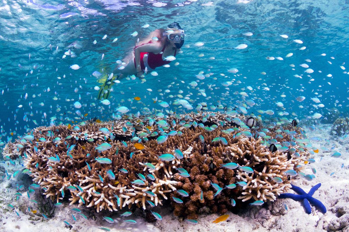 IDN_Wakatobi-Resort-Reef-Snorkeler-©-Wakatobi-Resort-Walt-Stearns.jpg