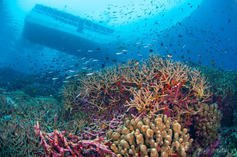 IDN_Wakatobi-Resort-Reef-Dive-Boat-Zoo-©-Wakatobi-Resort-008.jpg