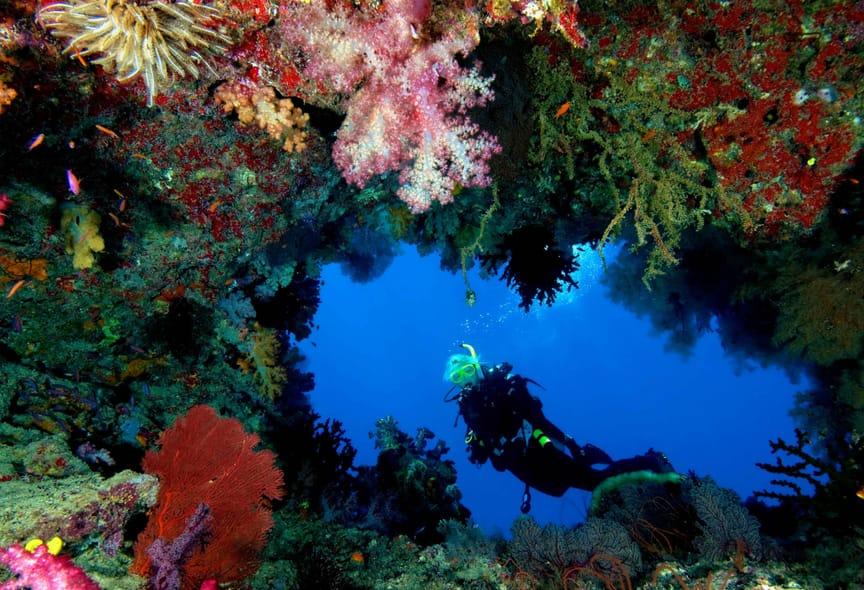 alphonse-experiences-scuba-diving-1.jpeg