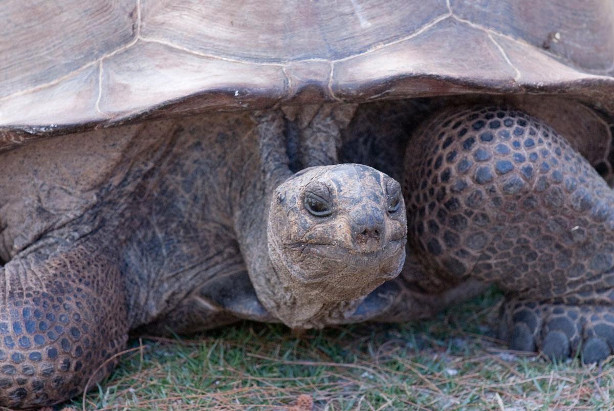 SYC_Aldabra-©08-Thomas-Baechtold-0027.jpg