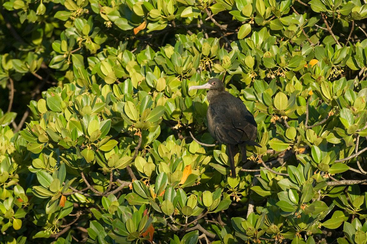 SYC_Aldabra-©08-Thomas-Baechtold-0154.jpg
