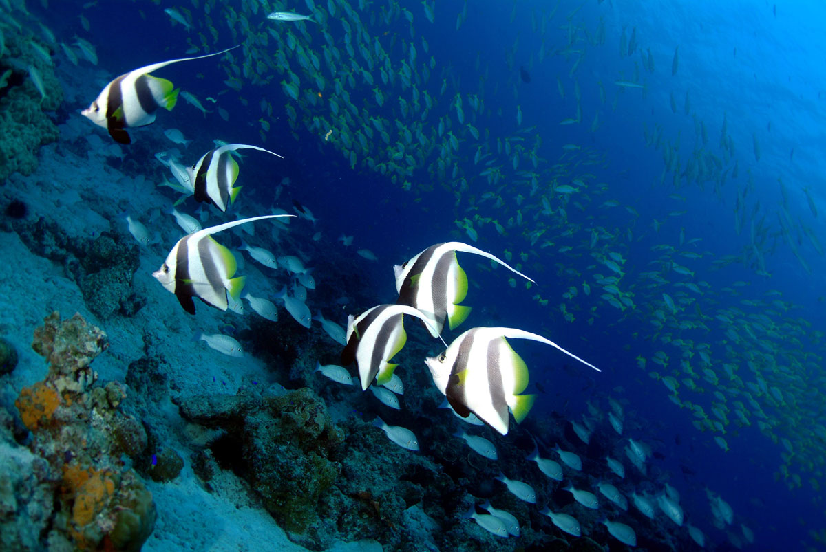 SYC_Snorkel-and-Dive-UW-Banner-Fish-©-Tony-Baskeyfield.jpg