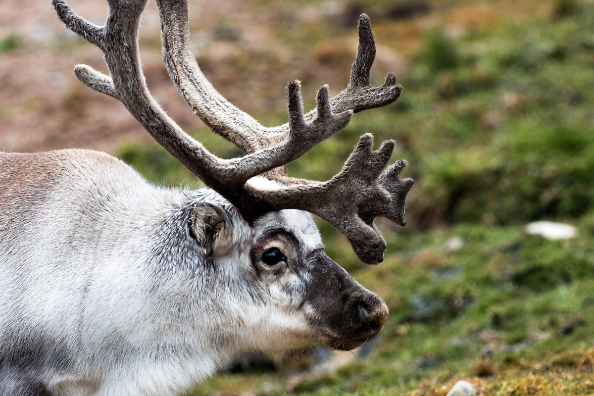 NOR_Svalbard-MS-Stockholm-©-Niklas-Nilsson-002.jpg