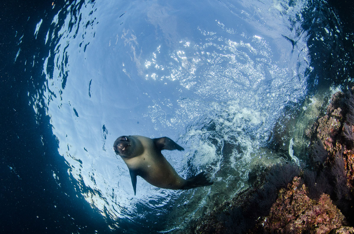 MEX_Baja-Sea-Lion-©-AdobeStock_247956591.jpg