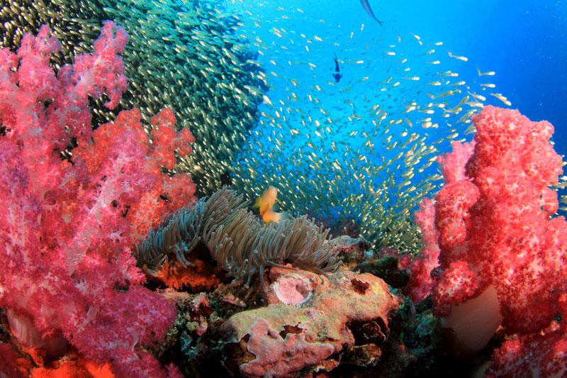 PLW_Palau-UW-Coral-Reef-©-Adobe-Stock 151278248.jpg