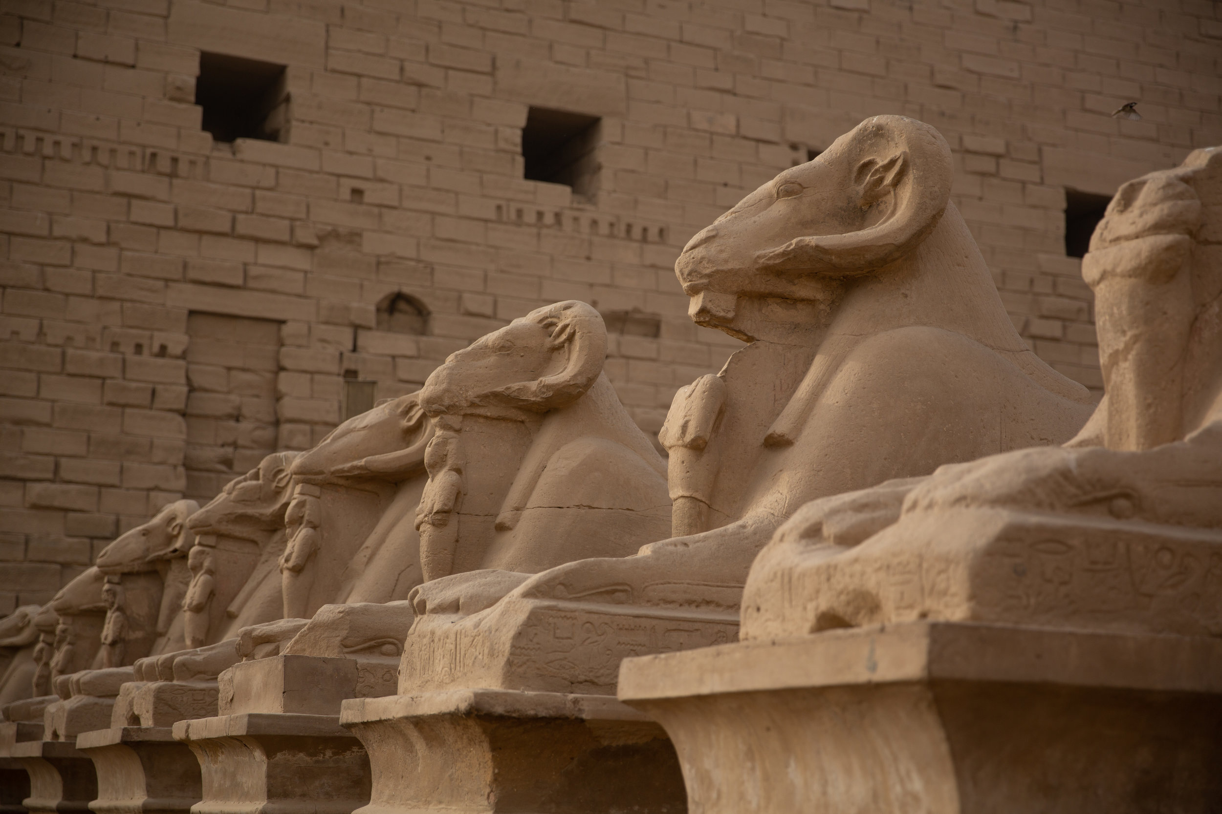 Avenue of Sphinx, Karnak Temple, Luxor - Egypt - Wild Earth Expeditions