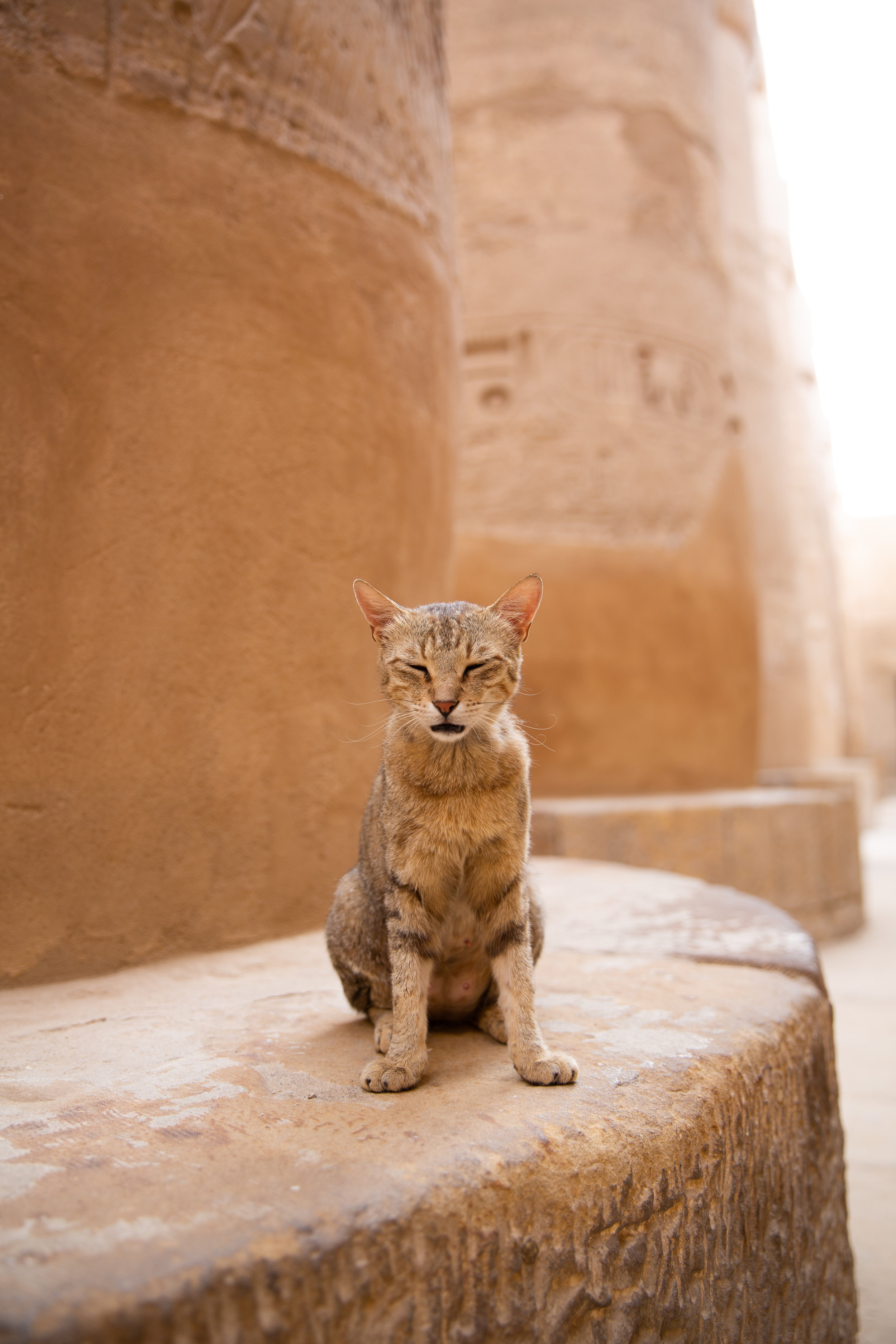 Cat at Karnak Temple, Luxor - Egypt - Wild Earth Expeditions