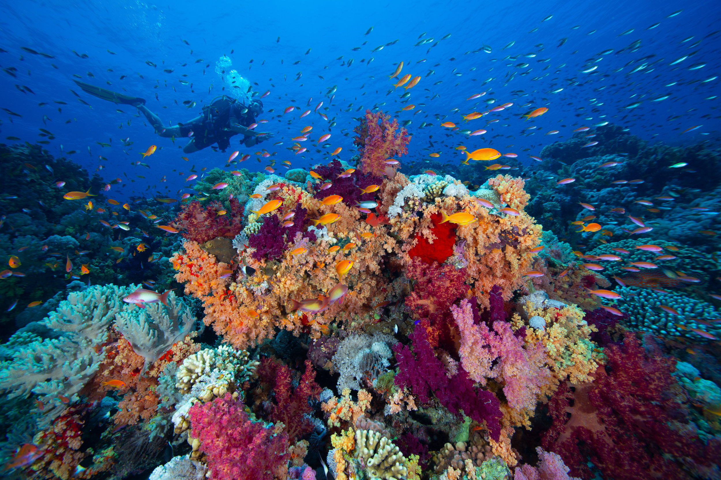 Underwater in the Red Sea, Sharm El Sheikh - Egypt - Wild Earth Expeditions