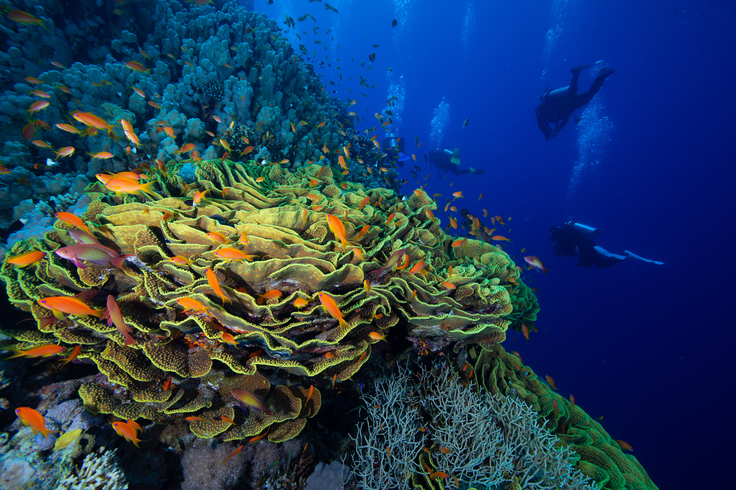 Underwater, Sharm El Sheikh, Red Sea - Egypt - Wild Earth Expeditions