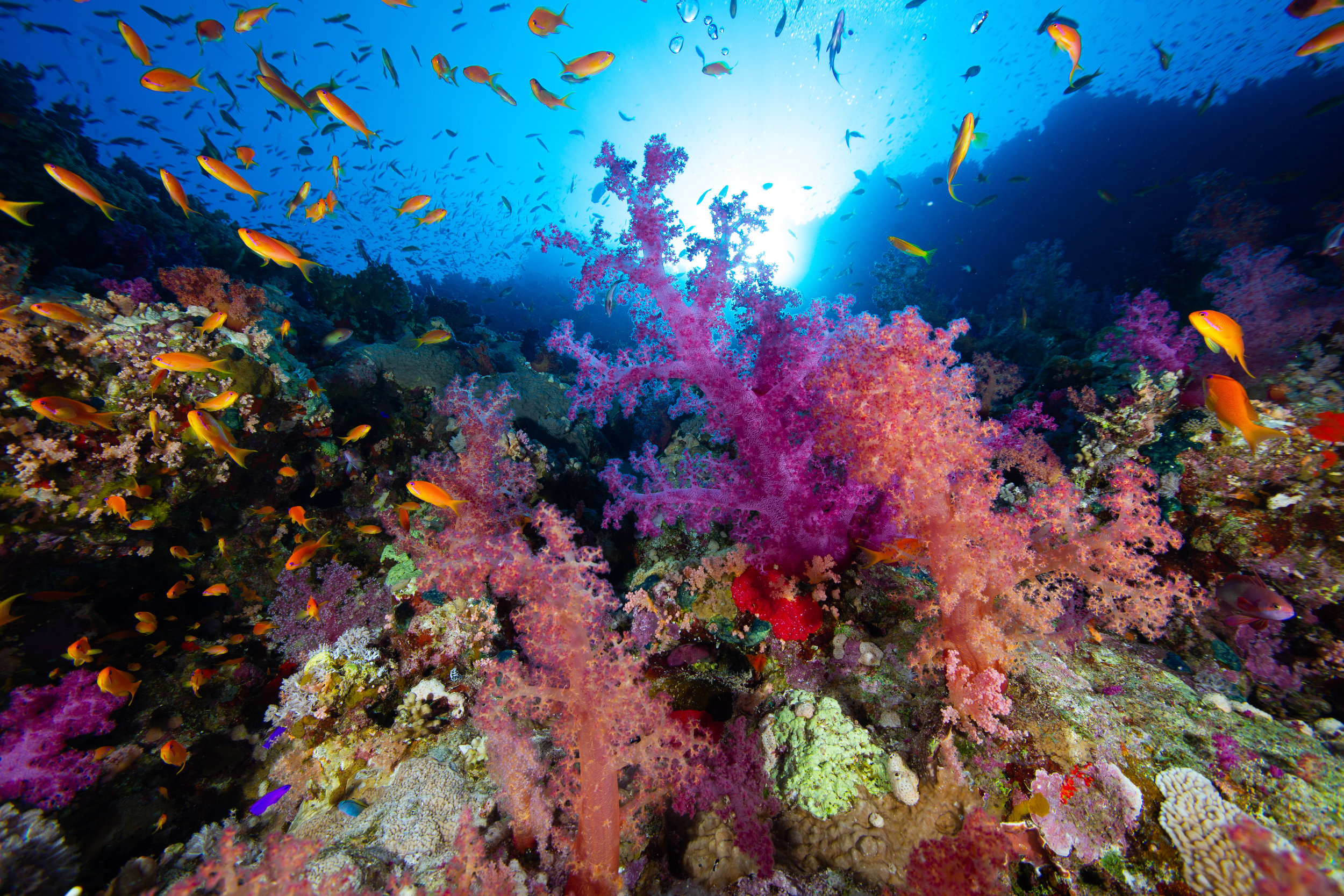 Underwater, Sharm El Sheikh. Red Sea - Egypt - Wild Earth Expeditions