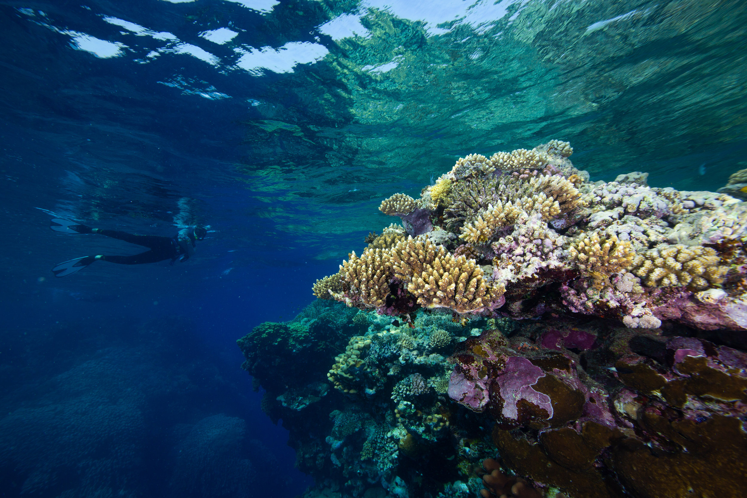 Snorkelling, Fury Shoal, Red Sea - Egypt - Wild Earth Expeditions