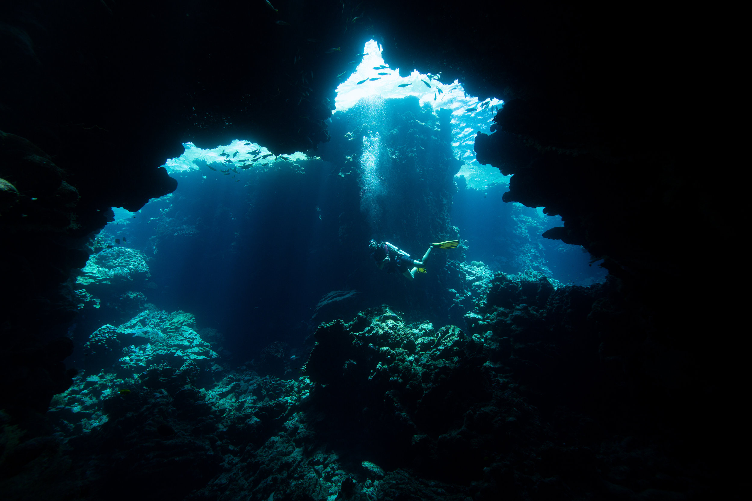 Cave system in Fury Shoal, Red Sea - Egypt - Wild Earth Expeditions