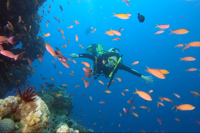 Anne Marie diving through a confetti like cloud of Anthias on the Great Barrier Reef.