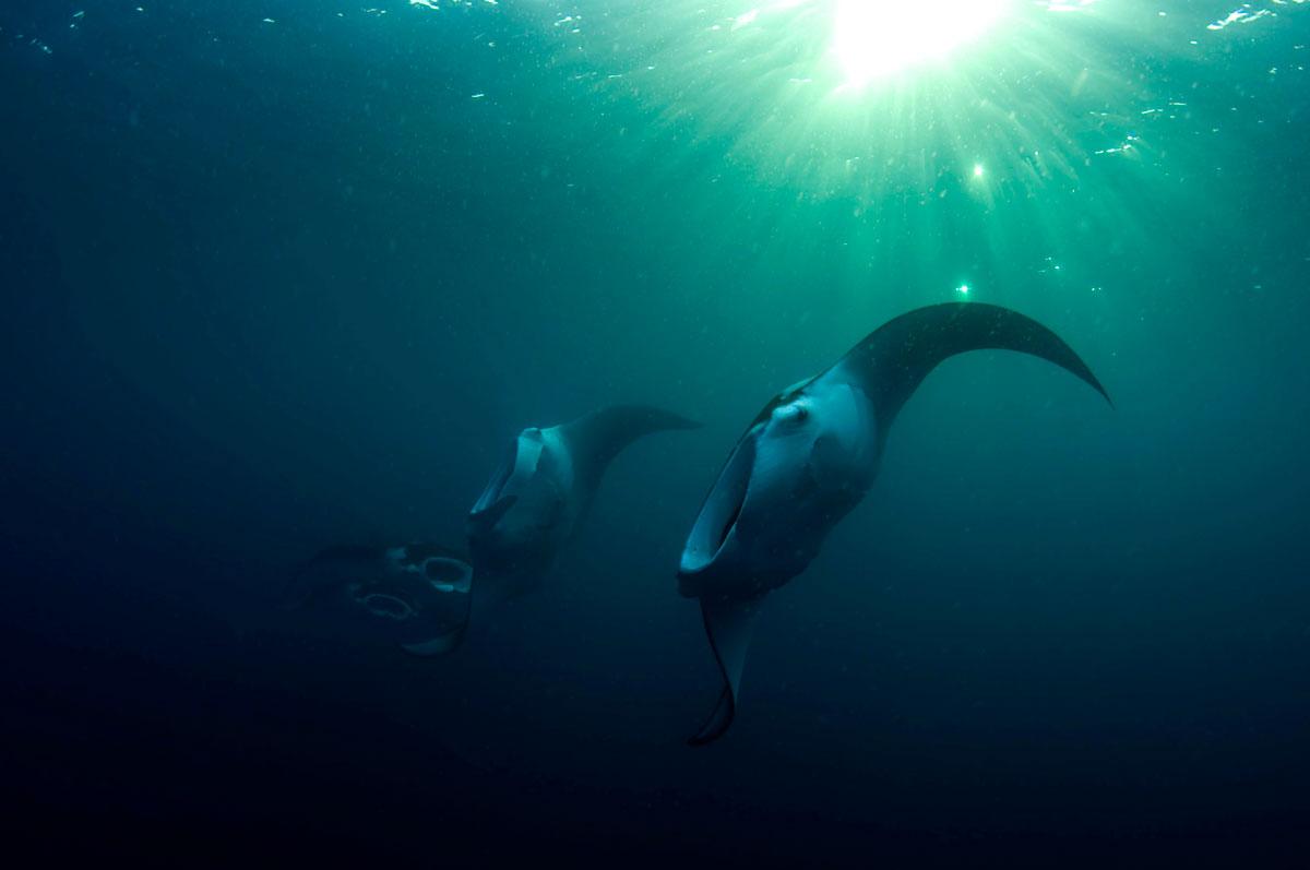 Palau-©10-Wild-Earth-Expeditions-391.jpg