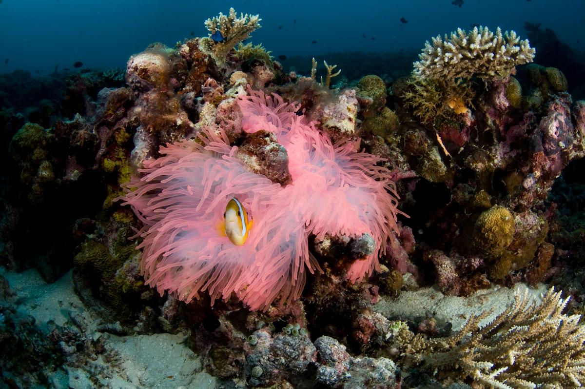 Palau-©10-Wild-Earth-Expeditions-359.jpg