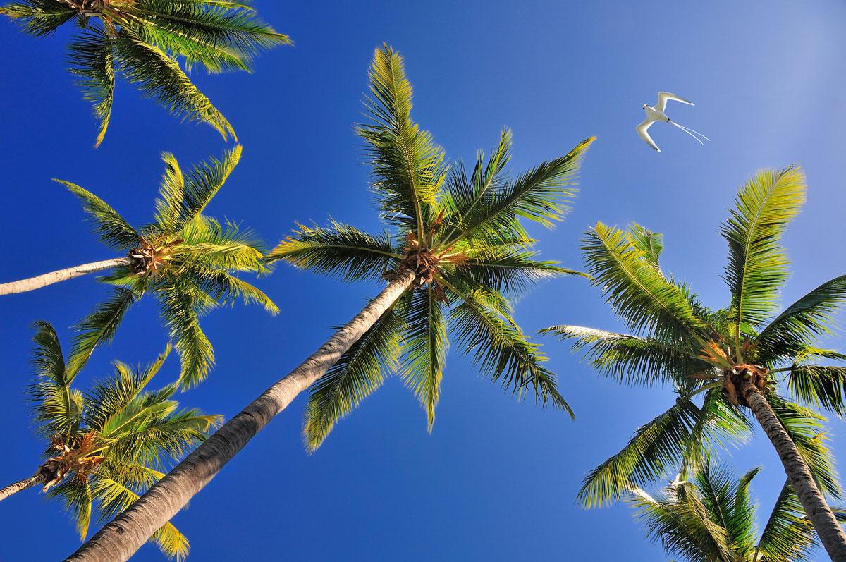 PLW_Palau-Tropic-Bird-©-Adobe-Stock_22660098.jpg