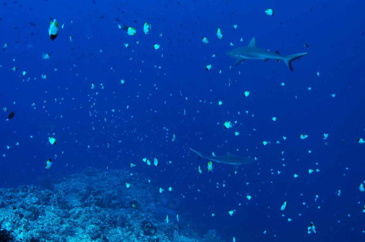 PLW_Palau-UW-New-Drop-Off-©-Thomas-Baechtold-003.jpg
