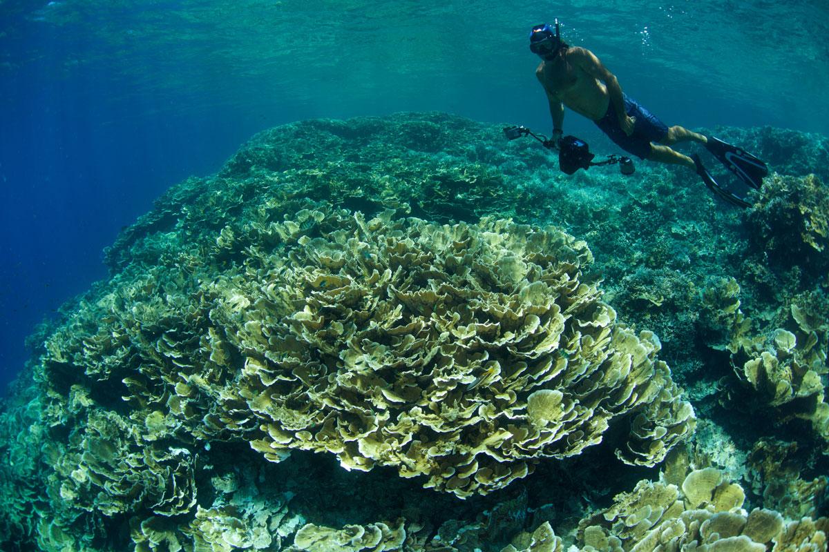 PLW_Palau-UW-Peleliu-©-Thomas-Baechtold-004.jpg