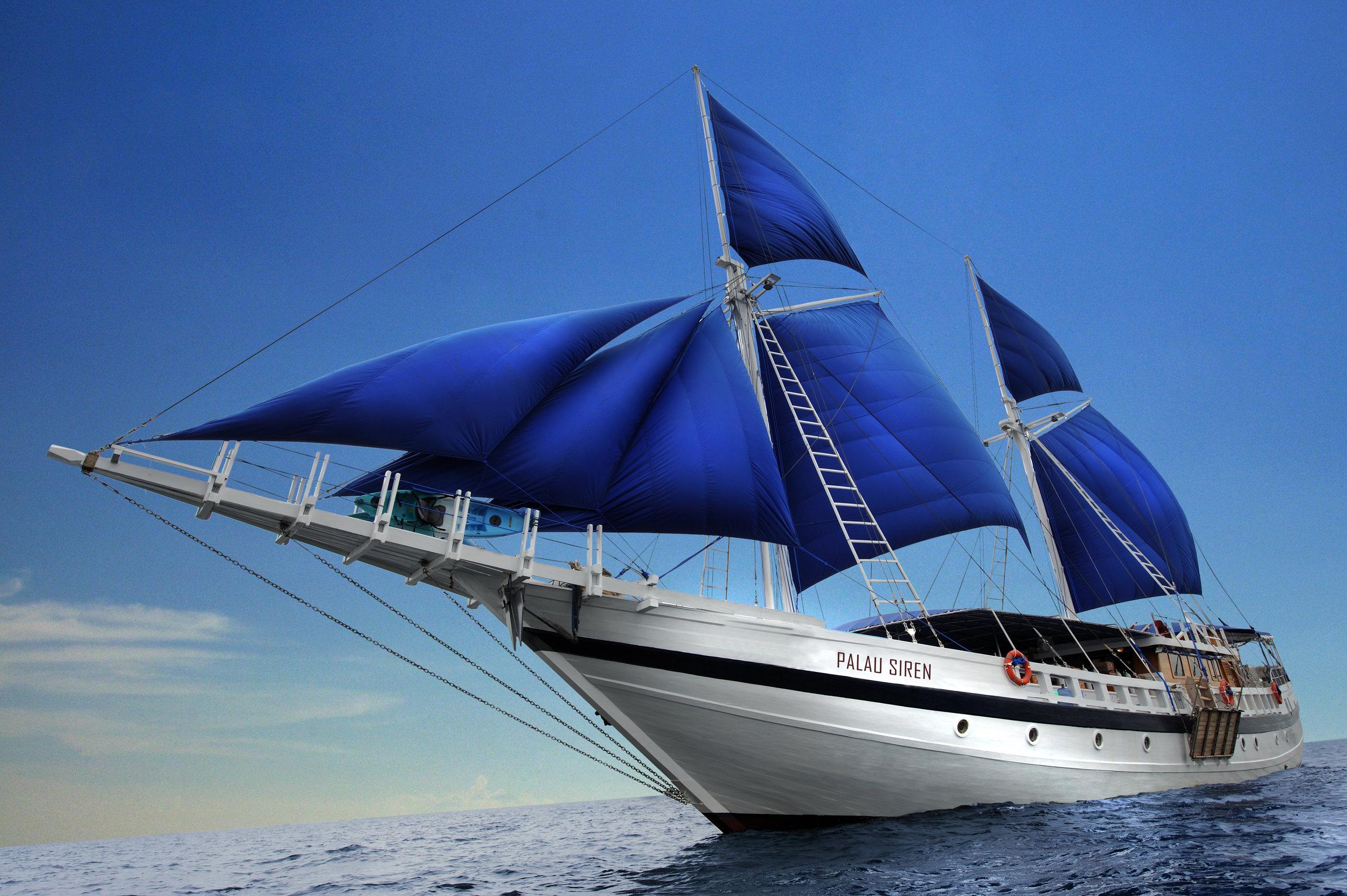 PLW_Palau Siren © WWDAS 0193.jpg