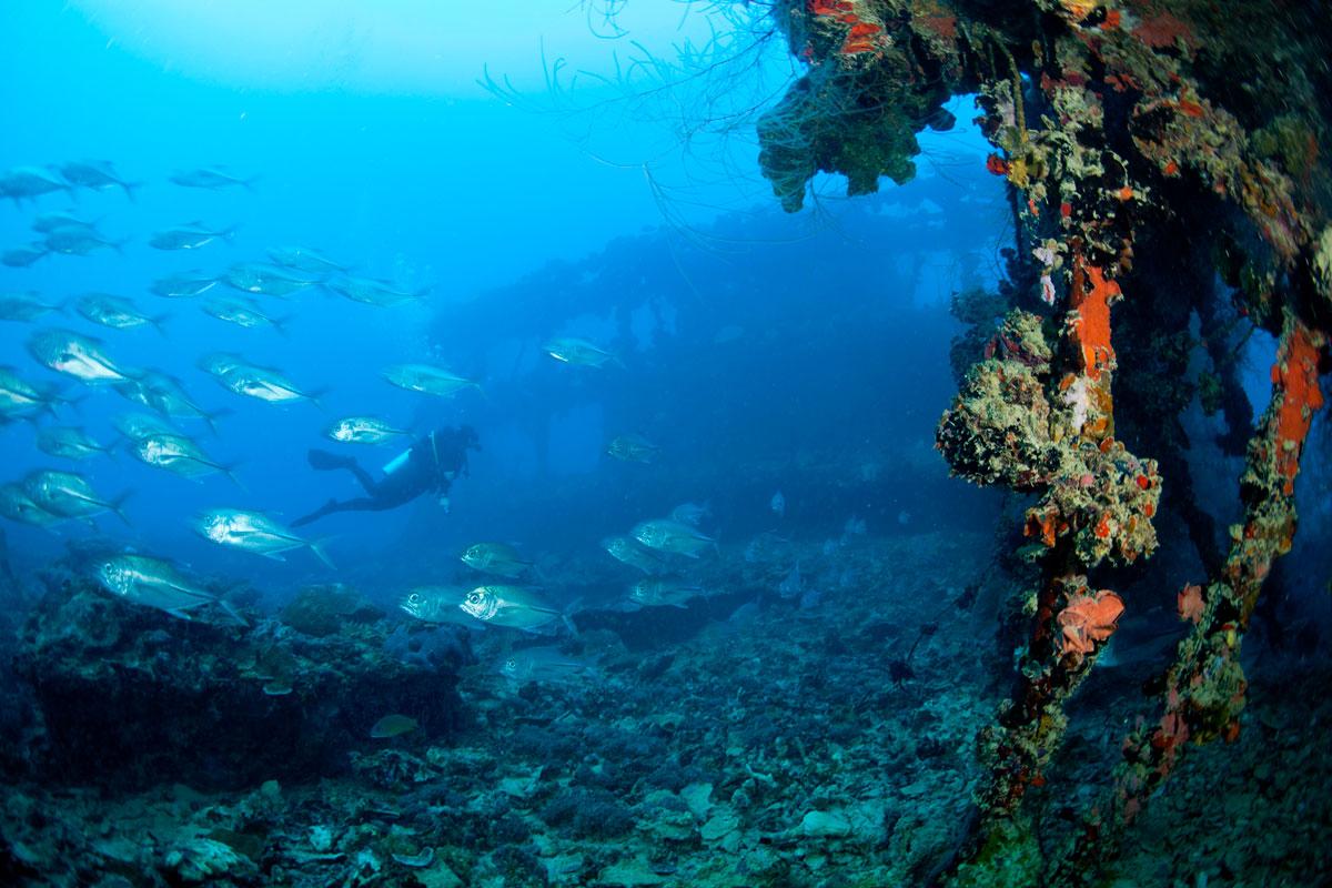 PLW_Palau-Siren-UW-Diver-Wreck-©-Siren-Fleet-WWDAS.jpg