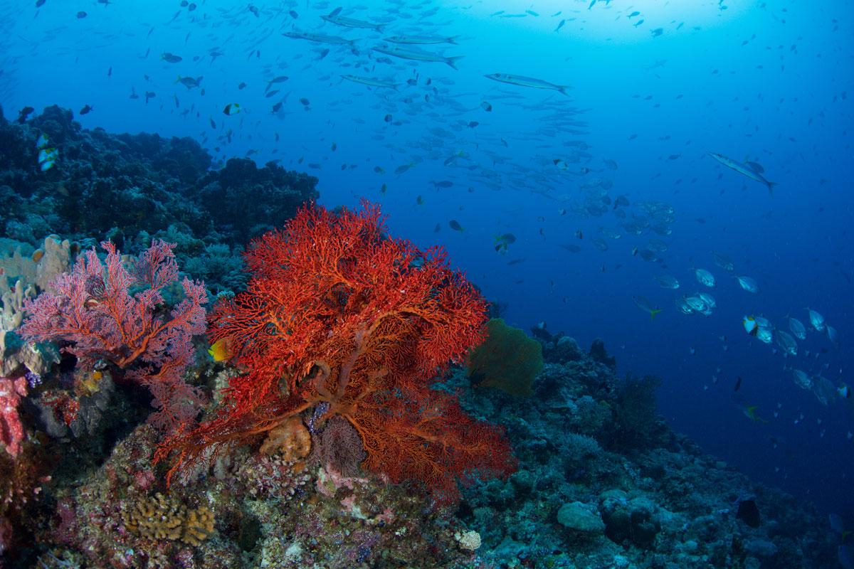 PLW_Palau-UW-Blue-Corner-©-Thomas-Baechtold-001.jpg