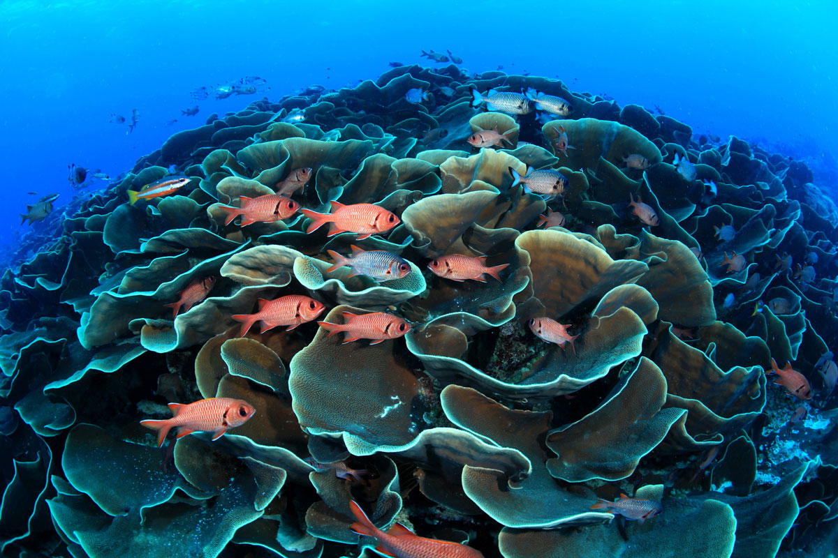 PLW_Siren-Fleet-UW-Reef-©-Siren-Fleet-WWDAS.jpg