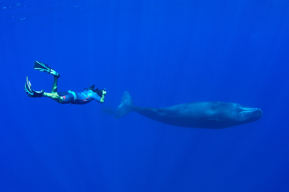 PLW_Sperm-whales-uw-©-Thomas-Baechtold-3805-2.jpg