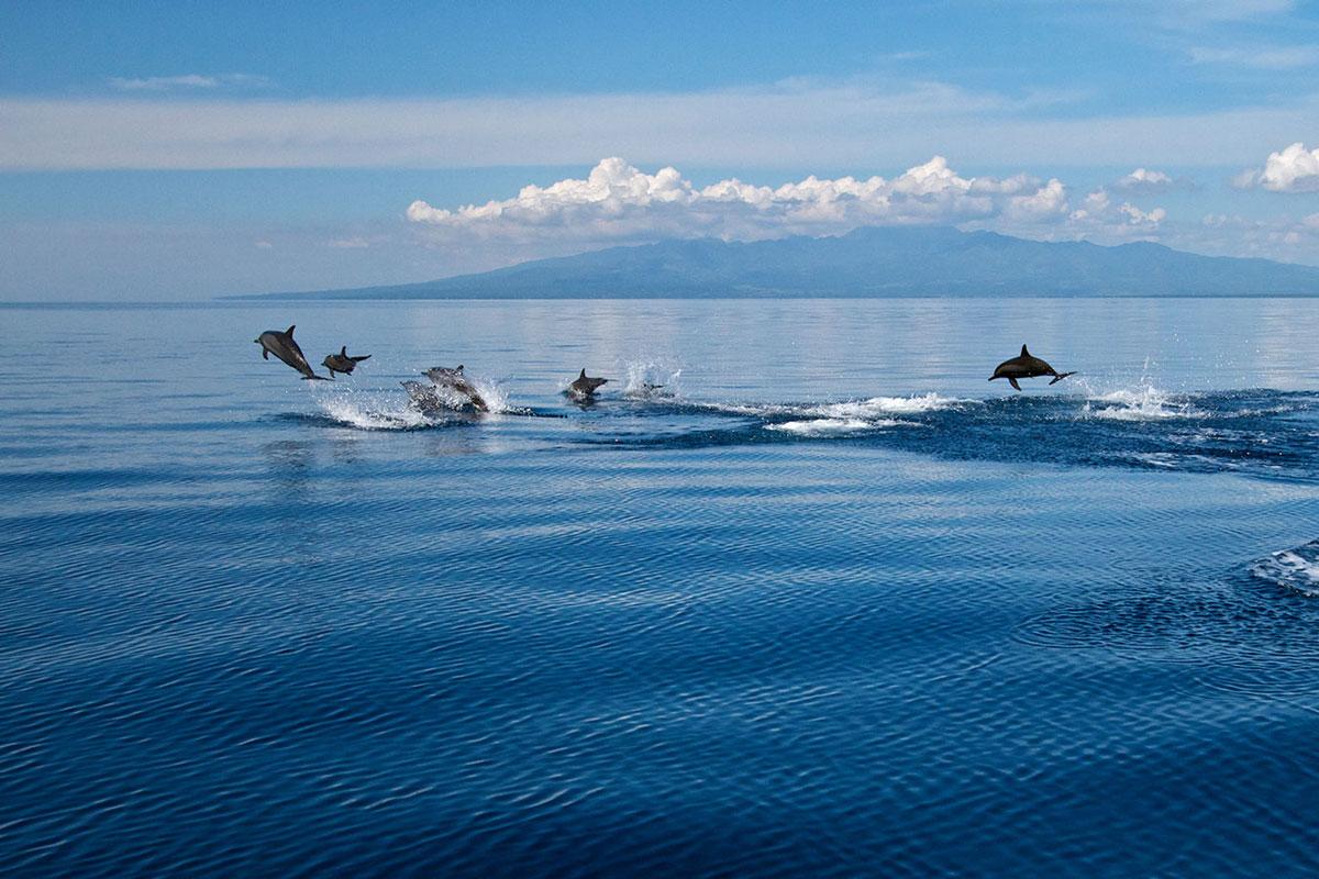 PHL_Dumaguete-Dolphins-©-Atmosphere-Resort-001.jpg