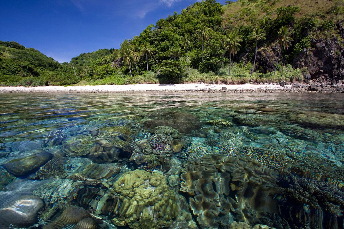 PHL_Dumaguete-UW-Apo-Island-©-Atmosphere-Resort-21.jpg