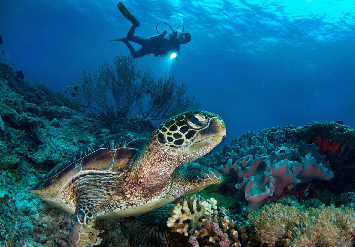 PHL_Dumaguete-UW-Diver-w-Turtle-©-Atmosphere-Resort-51.jpg
