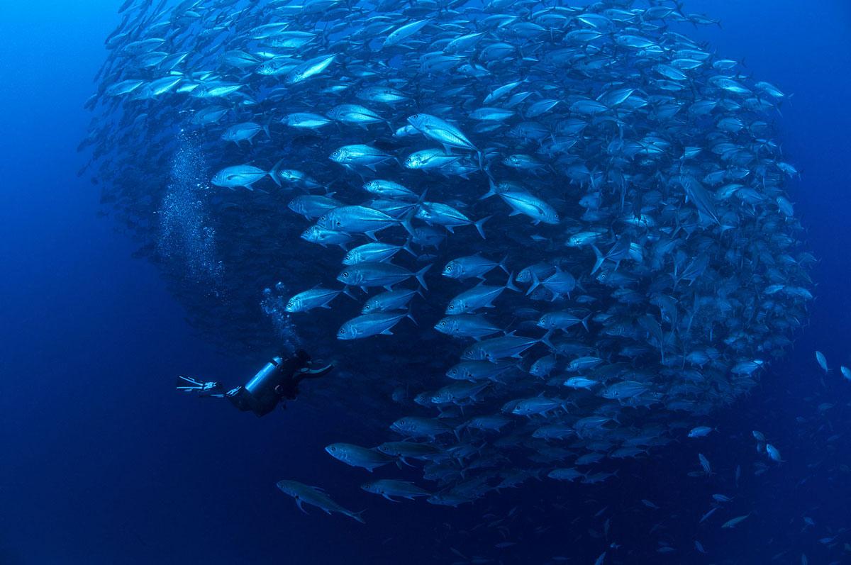 PHL_Dumaguete-UW-Jacks-©-Atmosphere-Resort-1.jpg