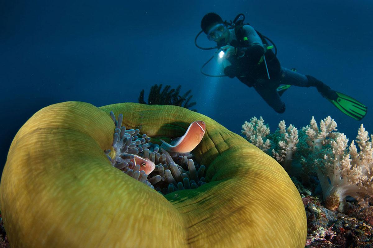 PHL_Dumaguete-UW-Pink-Anemone-Fish-w-Diver-©-Atmosphere-Resort-5.jpg