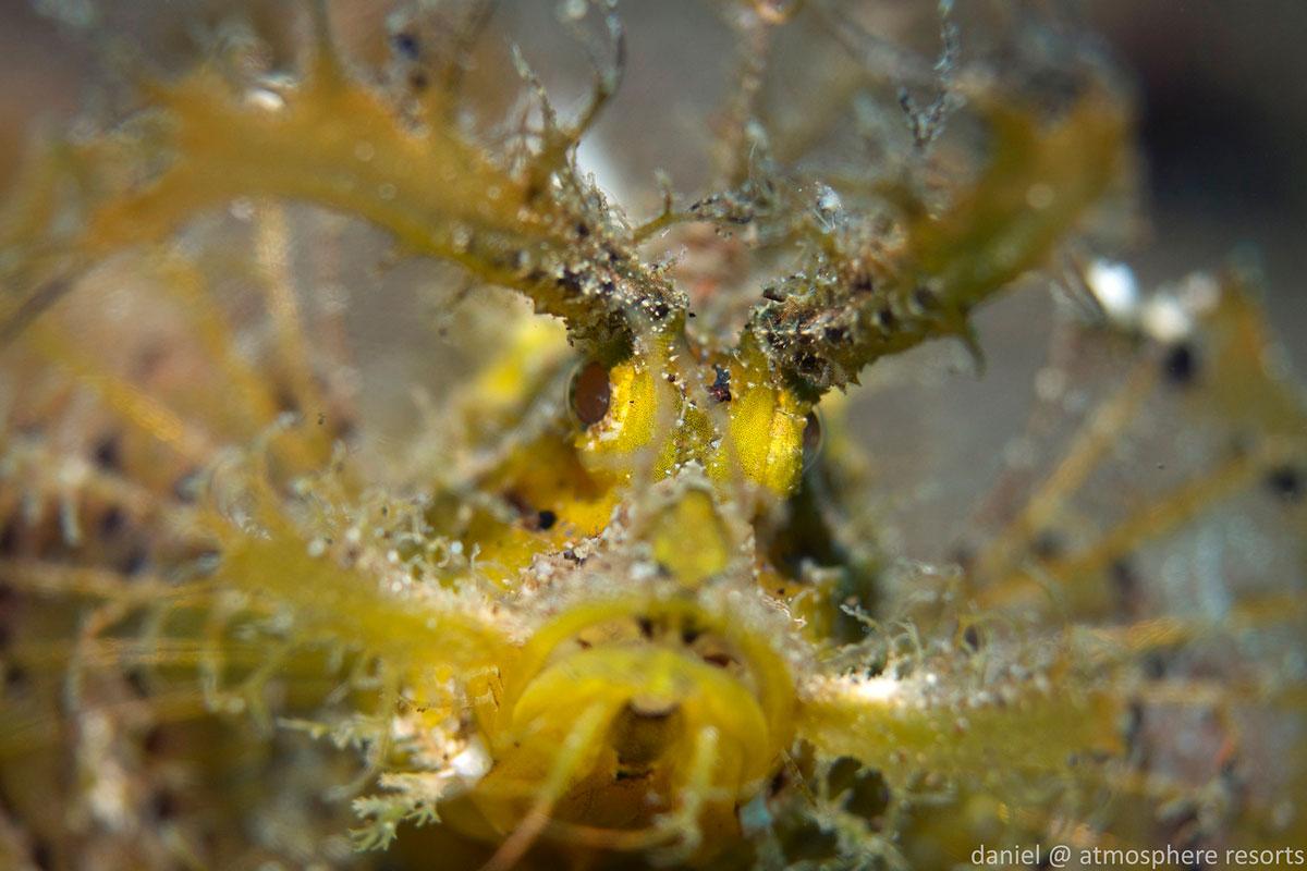 PHL_Dumaguete-UW-Scorpianfish-©-Atmosphere-Resort-52.jpg