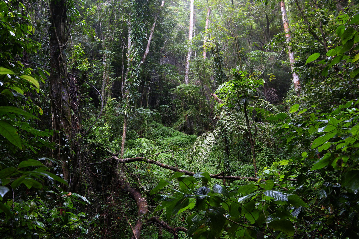 PHL_Philippines-Palawan-Jungle-©-AdobeStock_228508555.jpg