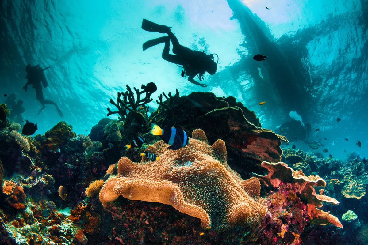 PHL_Philippines-UW-Reef-©-Adobe-Stock_42879810.jpg