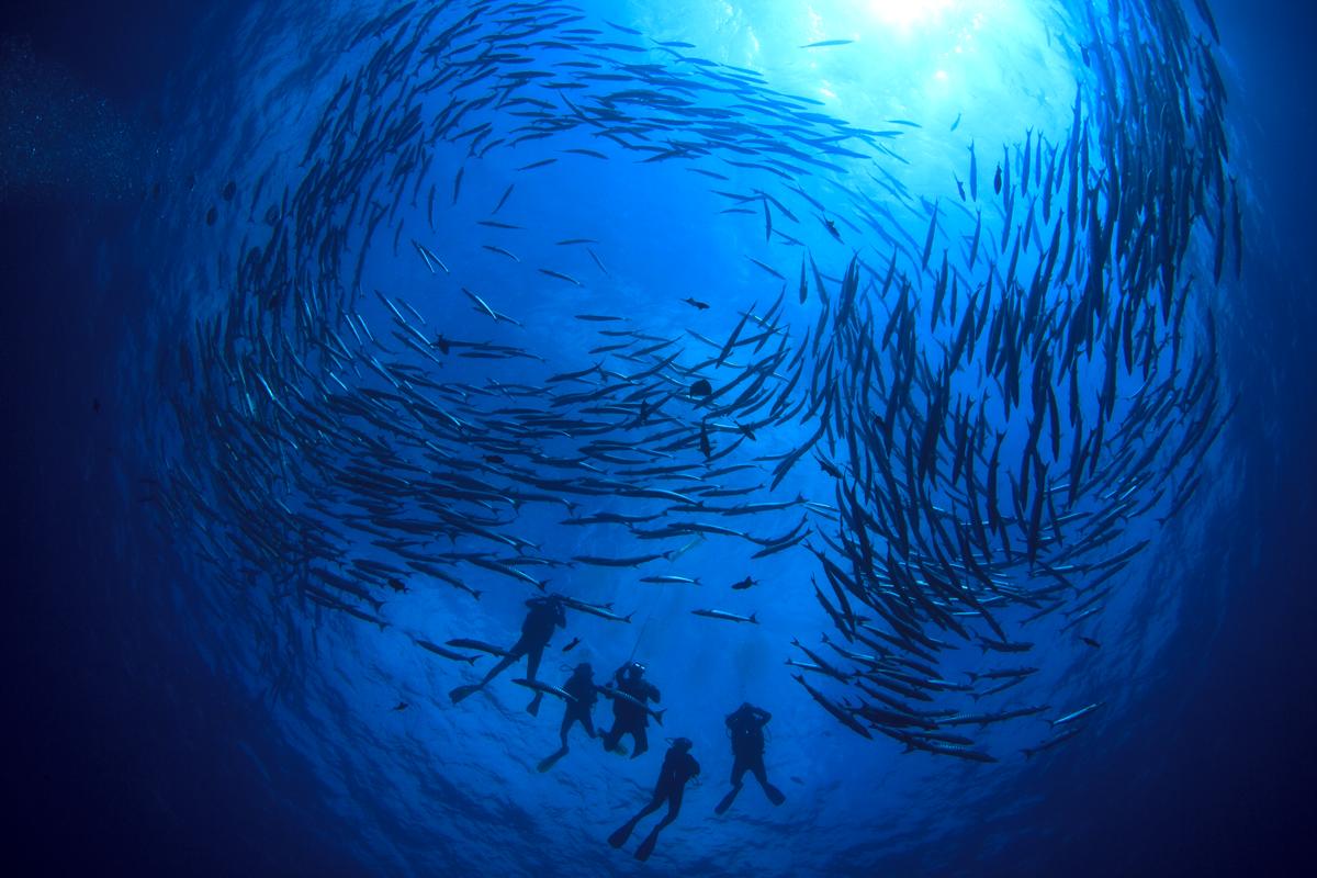 PHL_Philippines-UW-Divers-and-School-of-Fish-©-AdobeStock_129629207.png
