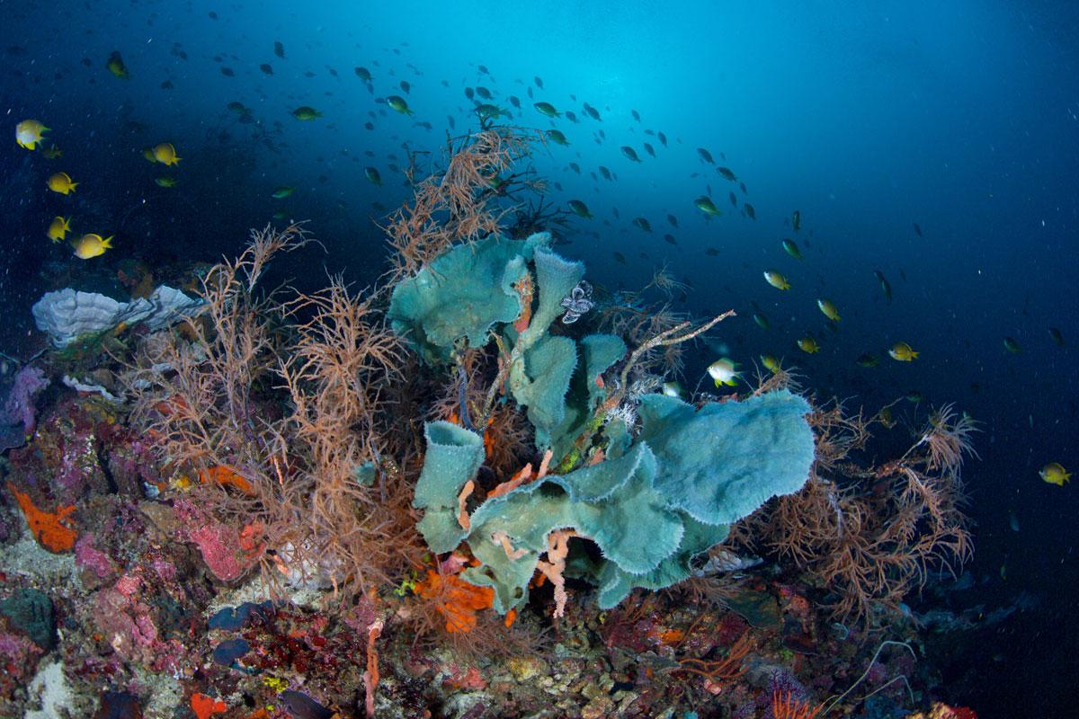 PHL_Philippines-UW-Southern-Leyte-©15-Thomas-Baechtold-11044.jpg