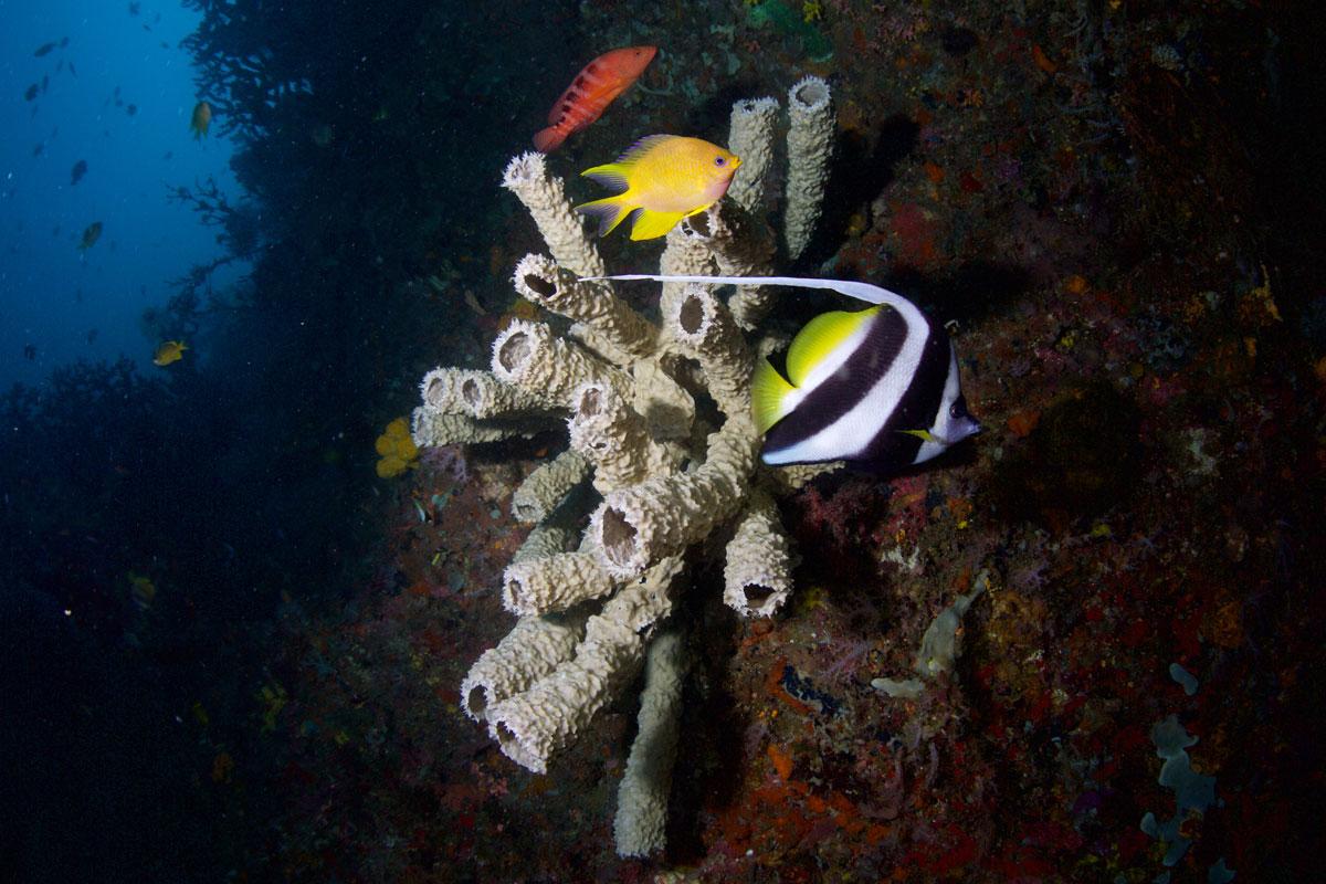 PHL_Philippines-UW-Southern-Leyte-©15-Thomas-Baechtold-11140.jpg