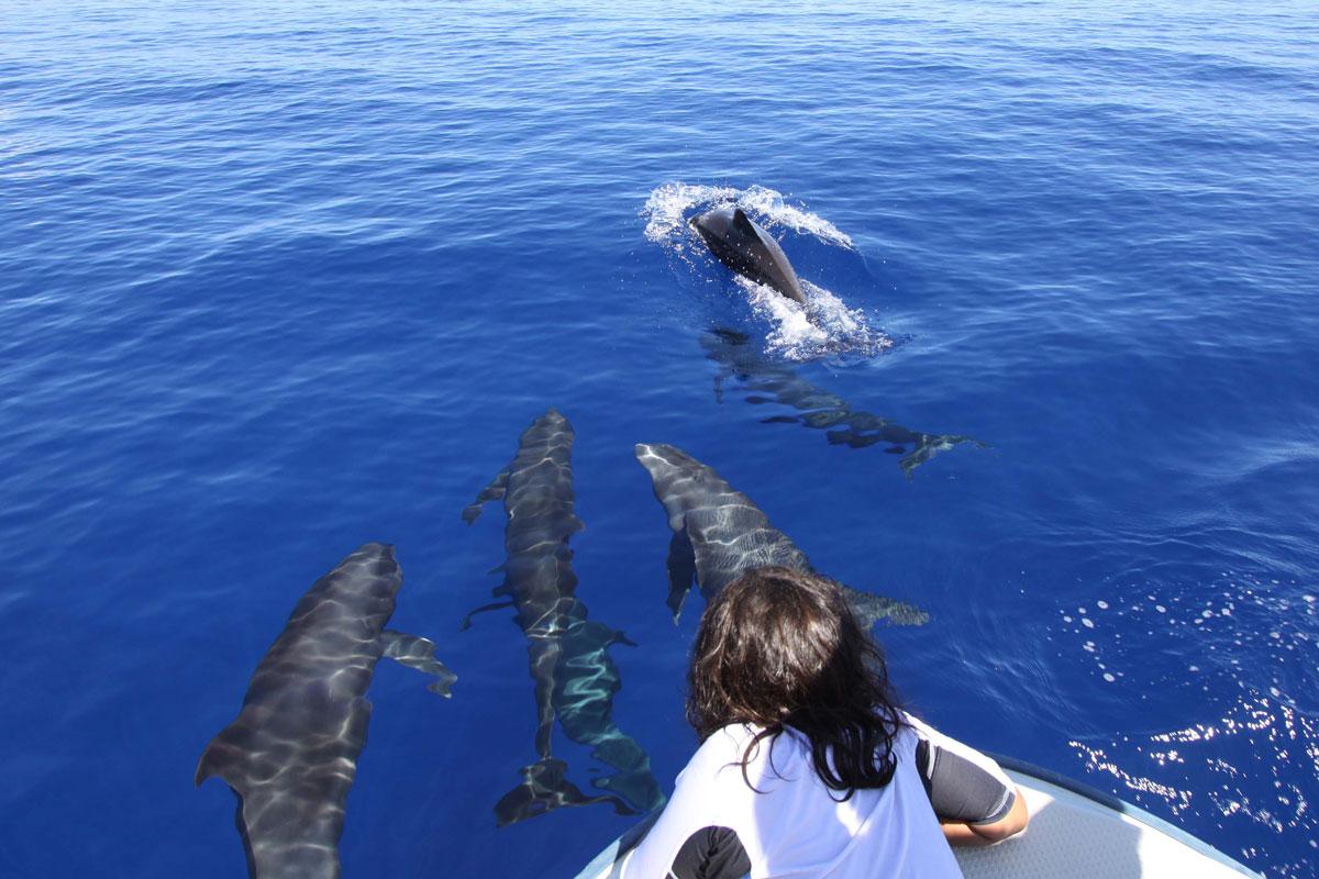 PLW_Palau-Melon-Headed-Whales-w-Admirer-©-Ron-Liedich-005.jpg