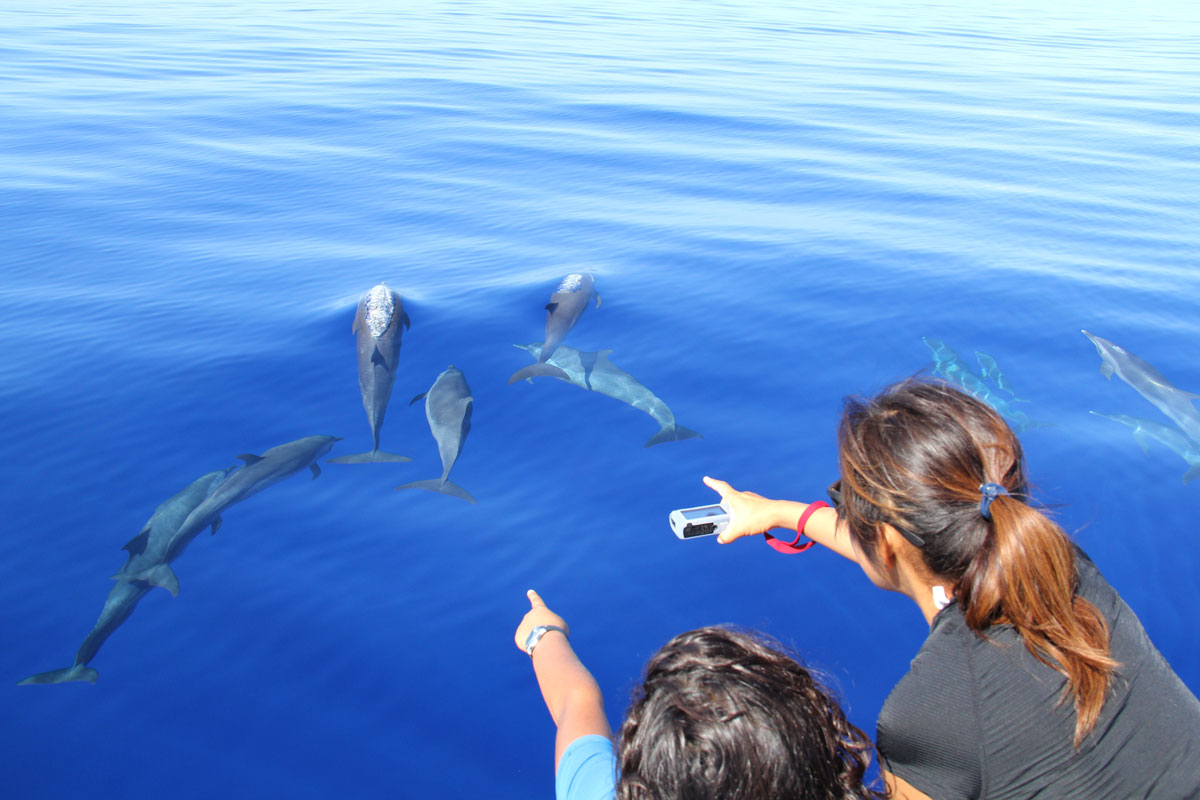 PLW_Palau-Spotted-Dolphins-and-Admirers-©-Ron-Liedich-003.jpg