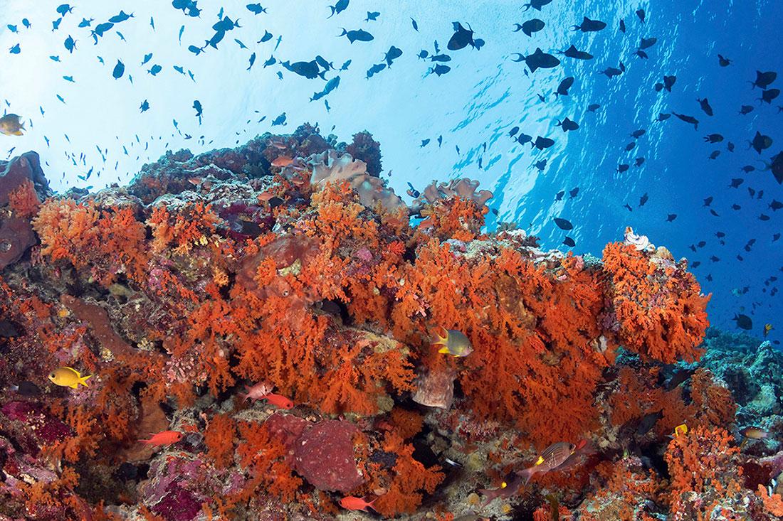 IDN_MV-Pelagian-UW-Reef-©-Wakatobi-Resort.jpg