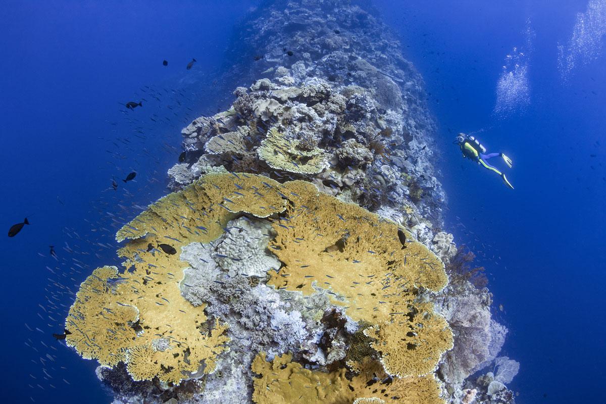 IDN_Wakatobi-Resort-UW-Blade-Reef-©-Wakatobi-Resort-R4A0638a.jpg