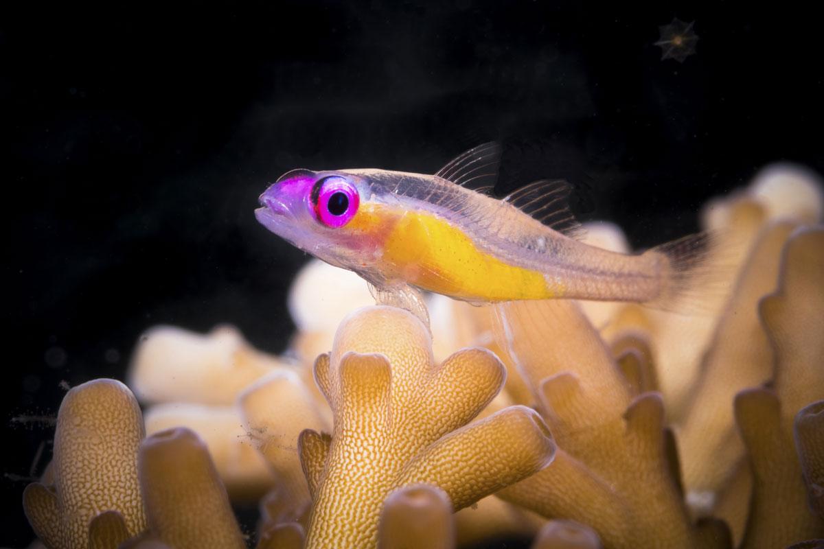 IDN_Wakatobi-Resort-UW-Reef-©-Wakatobi-Resort-057.jpg