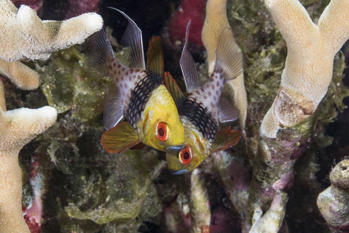 IDN_Wakatobi-Resort-UW-Reef-©-Wakatobi-Resort-063.jpg