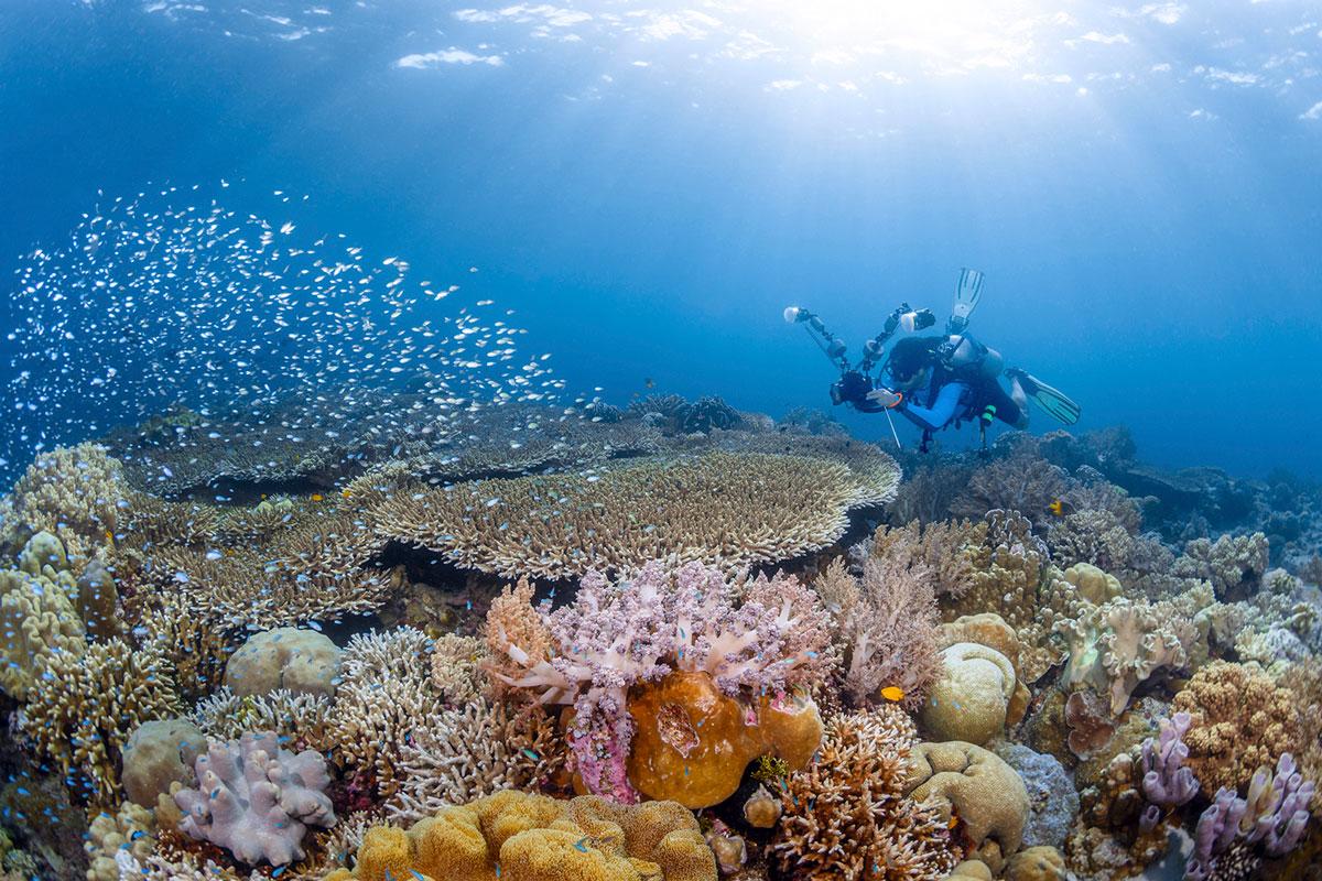 IDN_Wakatobi-Resort-UW-Reef-©-Wakatobi-Resort-MF003.jpg