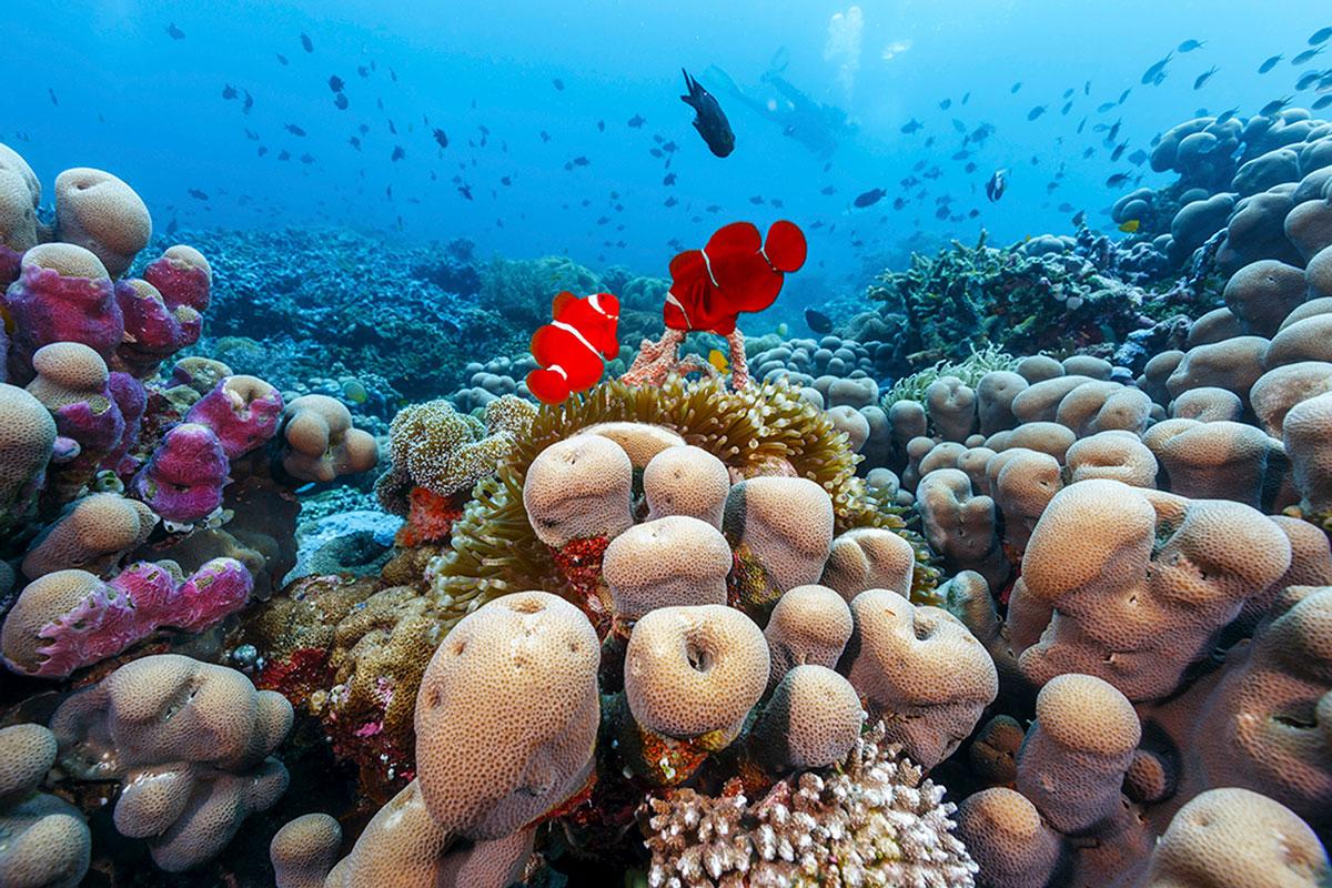 IDN_Wakatobi-Resort-UW-Reef-©-Wakatobi-Resort-MF004.jpg