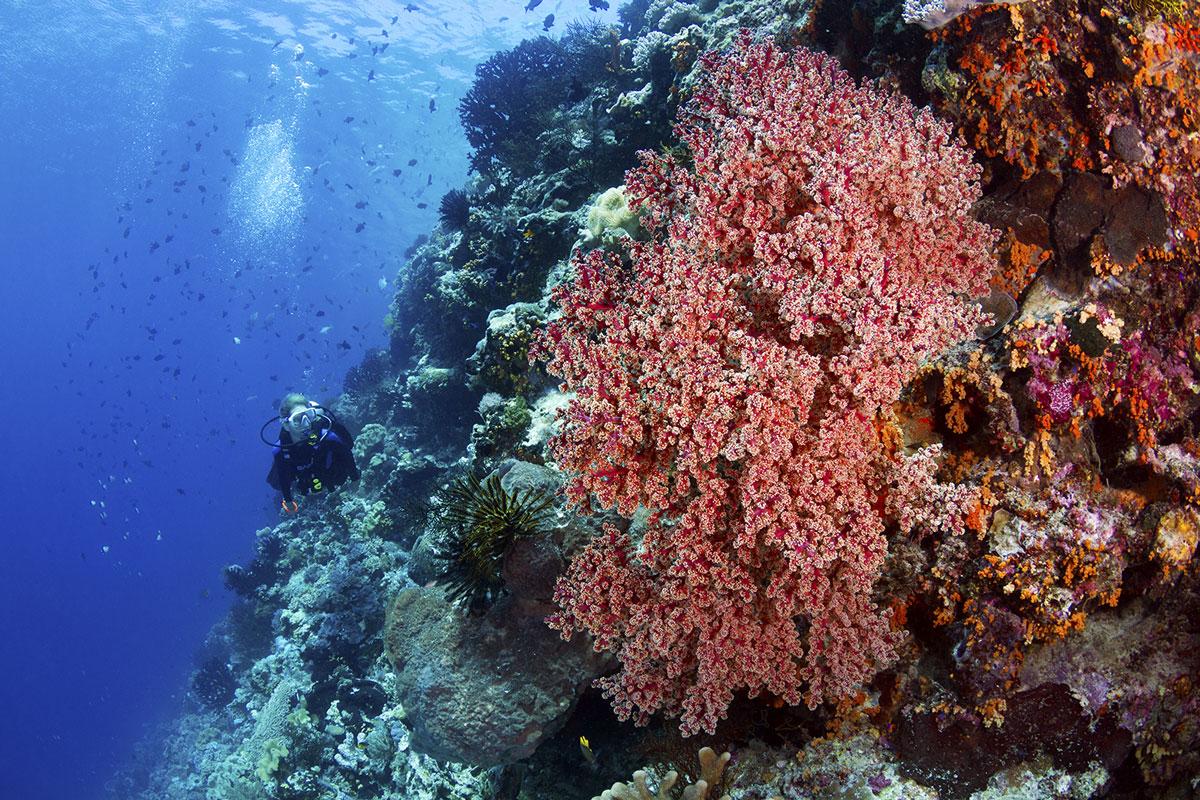 IDN_Wakatobi-Resort-UW-Reef-©-Wakatobi-Resort-WS007.jpg