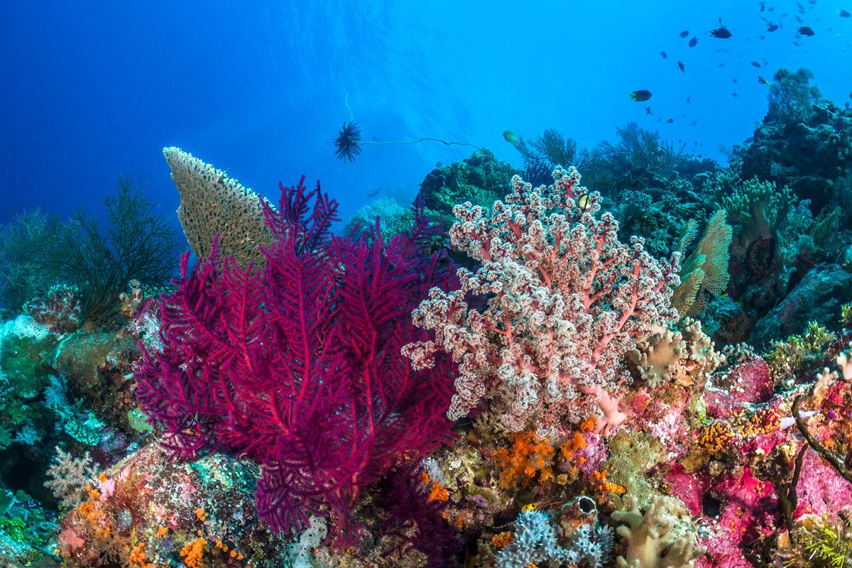 IDN_Wakatobi-Resort-UW-Reef-scene-©-Wakatobi-Resort-WM75070006.jpg