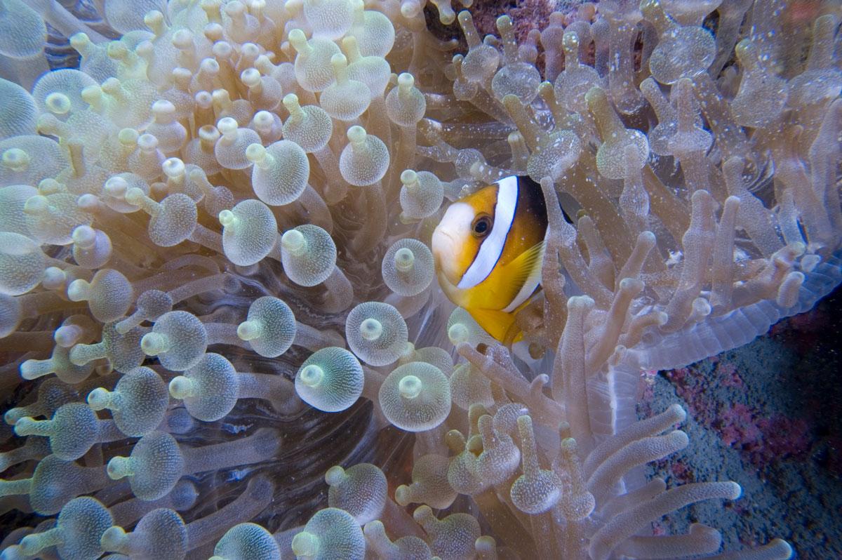IDN_Muck-Diving-©-Thomas-Baechtold-0908.jpg
